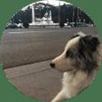 Adiestramiento canino a domicilio