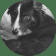 Alumnos de clases de adiestramiento canino