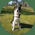 Alumna de clases de adiestramiento canino