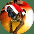 Clases en Madrid de adiestramiento canino