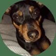 Clases en Online de adiestramiento canino