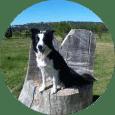 Clases en Online de educacion canina