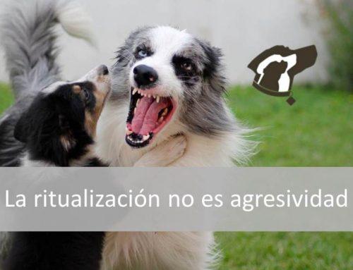 La ritualización no es agresividad