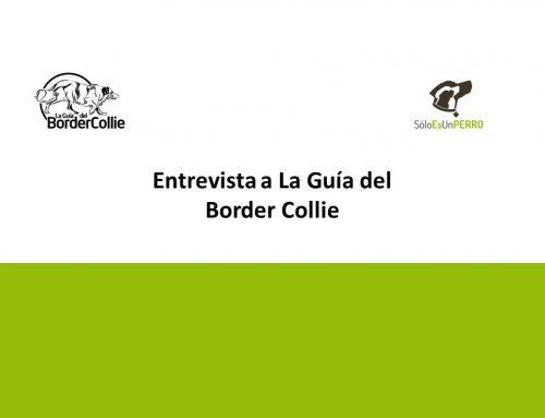 Entrevista a La Guía del Border Collie