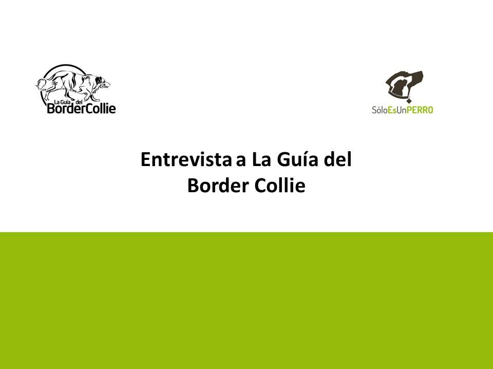 Entrevista Guia del Border Collie