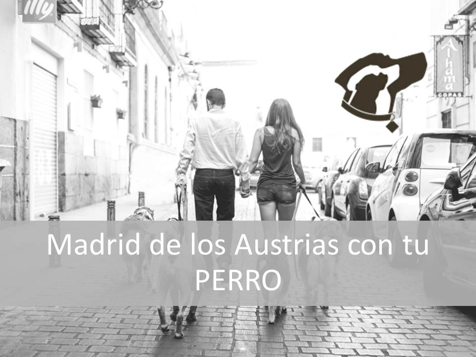 Madrid e los Austrias con tu perro