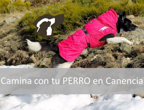 Excursión perrestre, camina con tu perro en Canencia