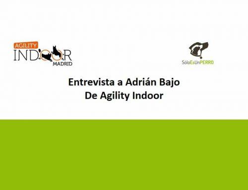 Entrevista a Adrian Bajo (Agility Indoor)