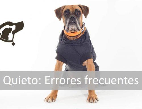 Entrenar con tu perro el quieto (Errores frecuentes)