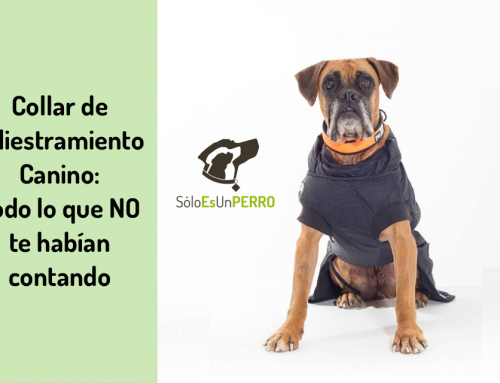 Collar de adiestramiento canino: 🐶 Todo lo que NO te habían contado