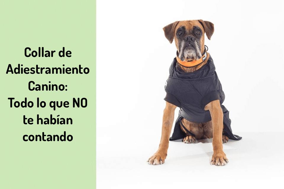 collar de adiestramiento canino