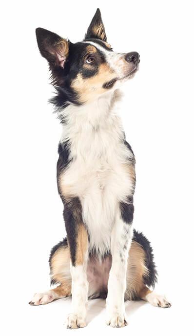 adiestra a tu perro