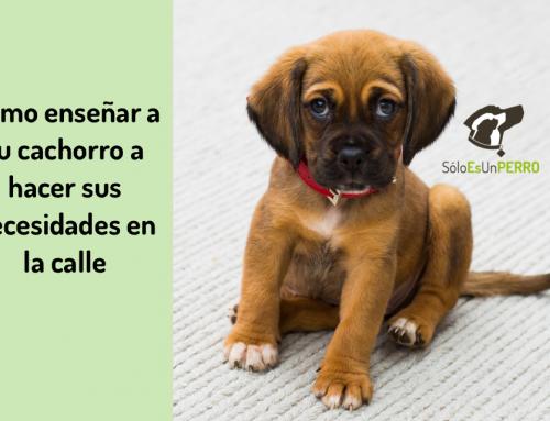 🐕 Cómo Enseñar a Tu Cachorro a Hacer Sus Necesidades en la Calle con 6 Sencillas Pautas