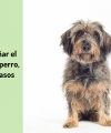 Cómo enseñar el quieto a tu perro 🐩⏰