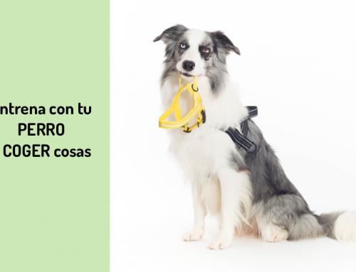 Cómo Entrenar con tu Perro a Coger Cosas de Forma Divertida 💡🐶