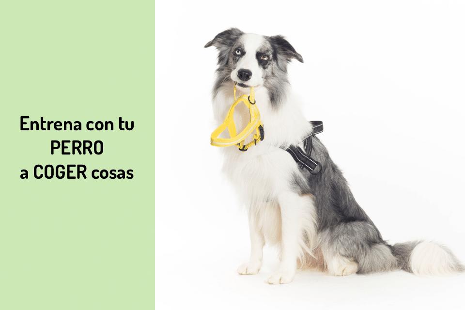 entrena con tu perro a coger cosas