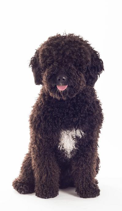 Adiestramiento canino en la comunidad de madrid