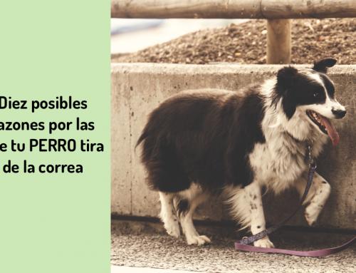 🐕 10 Razones Que Explican Por Qué Tu Perro Tira de la Correa al Pasear 🔟