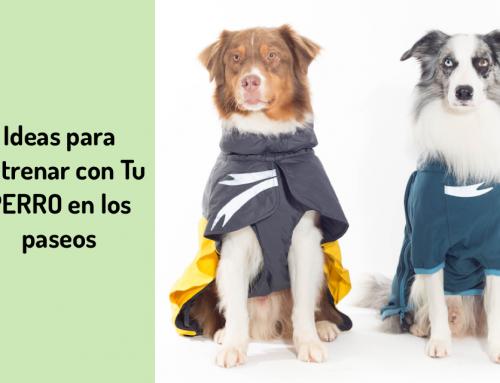 🐾 Ideas para Entrenar a Tu Perro Durante Los Paseos 🏆