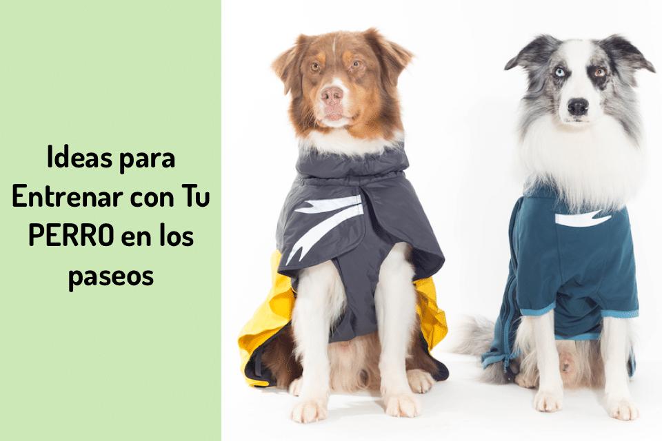 Ideas para entrenar con tu perro