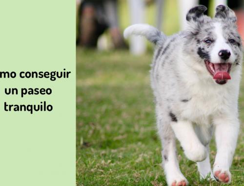 🚶Cómo Conseguir Un Paseo Tranquilo Con Tu Perro. ¡No Es Cuestión De Tiempo En La Calle! 🐩
