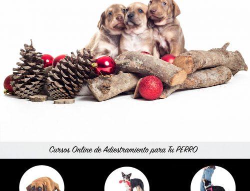 🎁 ¿Qué Le Puedo Regalar a Mi Perro por Navidad? 🎄