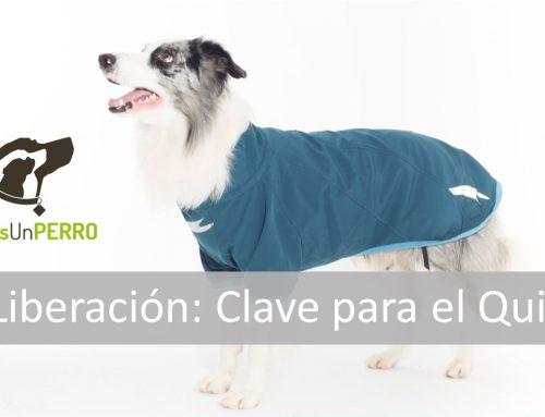 ✋ La Liberación: La Clave para Adiestrar a un Perro a Quedarse Quieto ✋