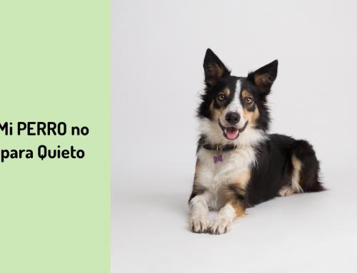 🐕 Mi Perro No Para Quieto en Casa 🏃♂️