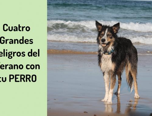 ⚠️4 peligros del verano para tu perro que afectan a su bienestar 🏖️