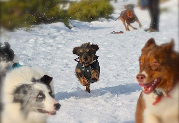 entrena con tu perro
