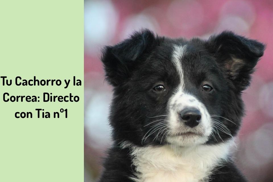 Tu Cachorro y la Correa