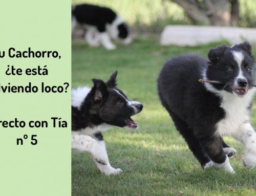 Tu Cachorro, ¿te está volviendo loco?:  Directo con Tía nº5