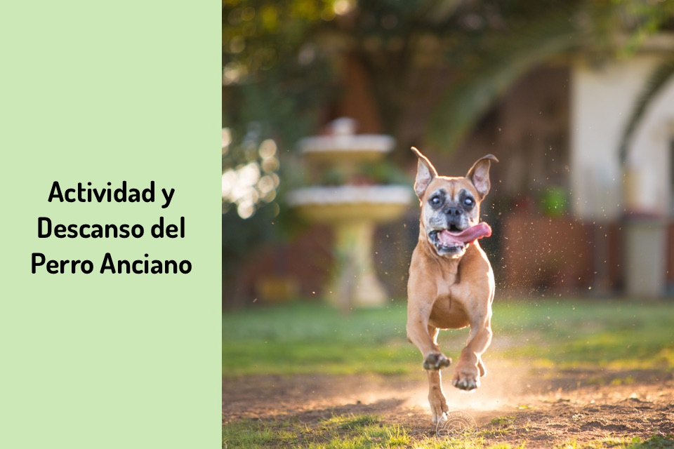 La actividad del perro anciano