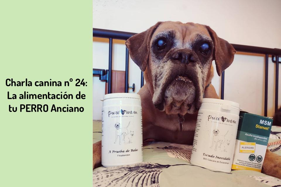 La alimentación de tu perro Anciano