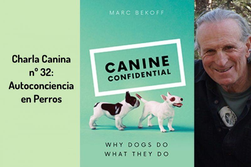 Charla Canina nº 32: Autoconciencia en Perros
