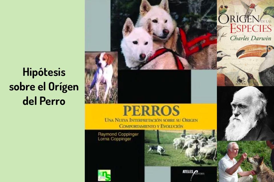 Hipótesis sobre el Orígen del Perro