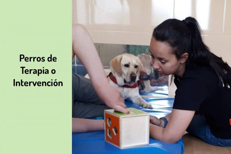 Perros de terapia e intervención