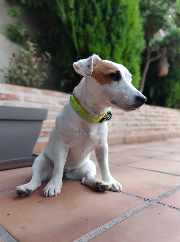 Alumnos de Cursos en Madrid de Adiestramiento de perros