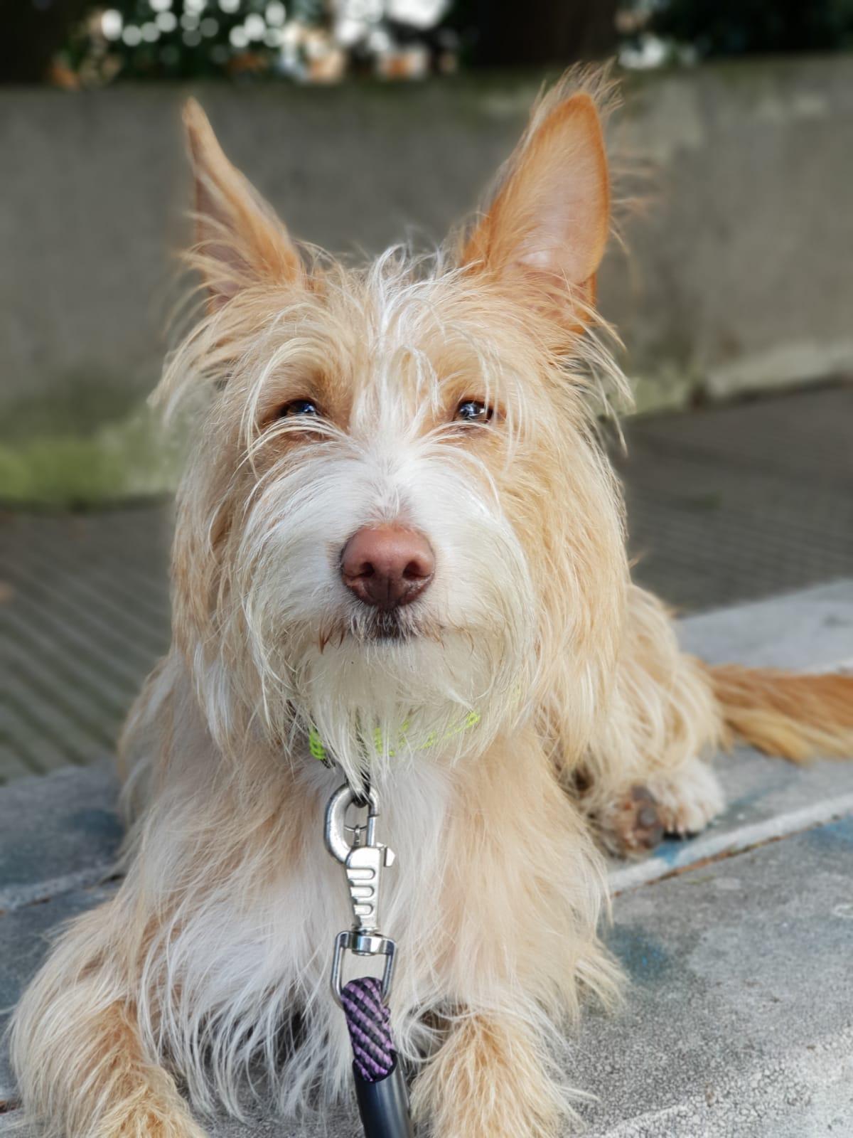 Formacion canina en Madrid