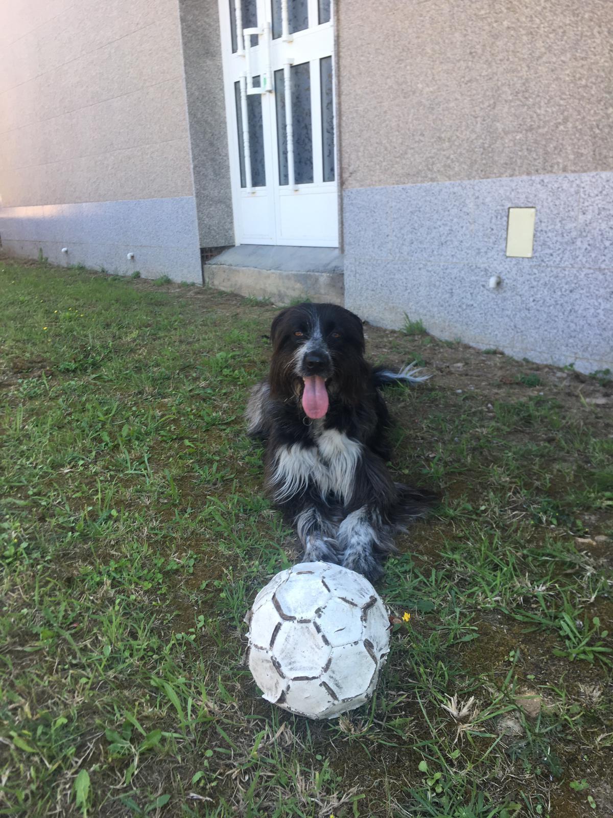 Alumnas de clases de educacion canina madrid