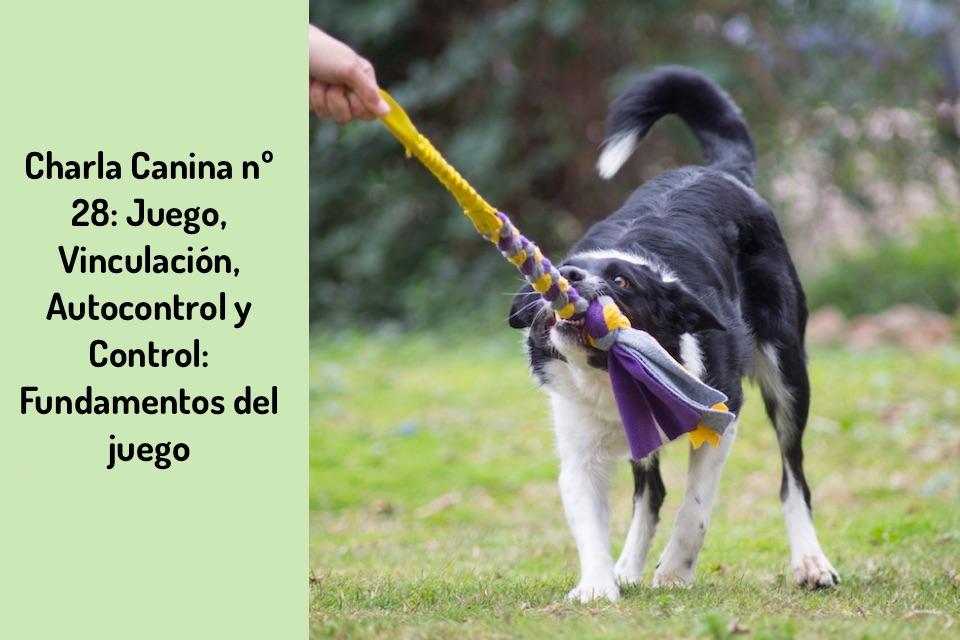 Charla Canina nº 28: Juego, Vinculación, Autocontrol y Control: Fundamentos del juego