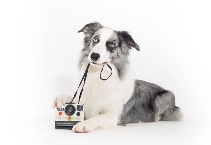 Entrenamiento canino en Madrid
