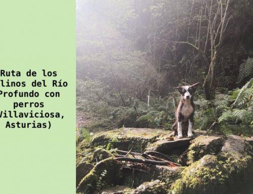 Ruta de los Molinos del Río Profundo con perros (Villaviciosa, Asturias)