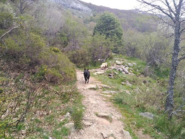 Ruta de Fuente Cobre con perros, Palencia