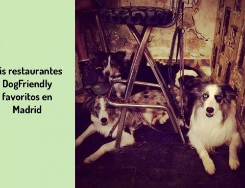 Mis Restaurantes DogFriendly para perros educados en Madrid centro