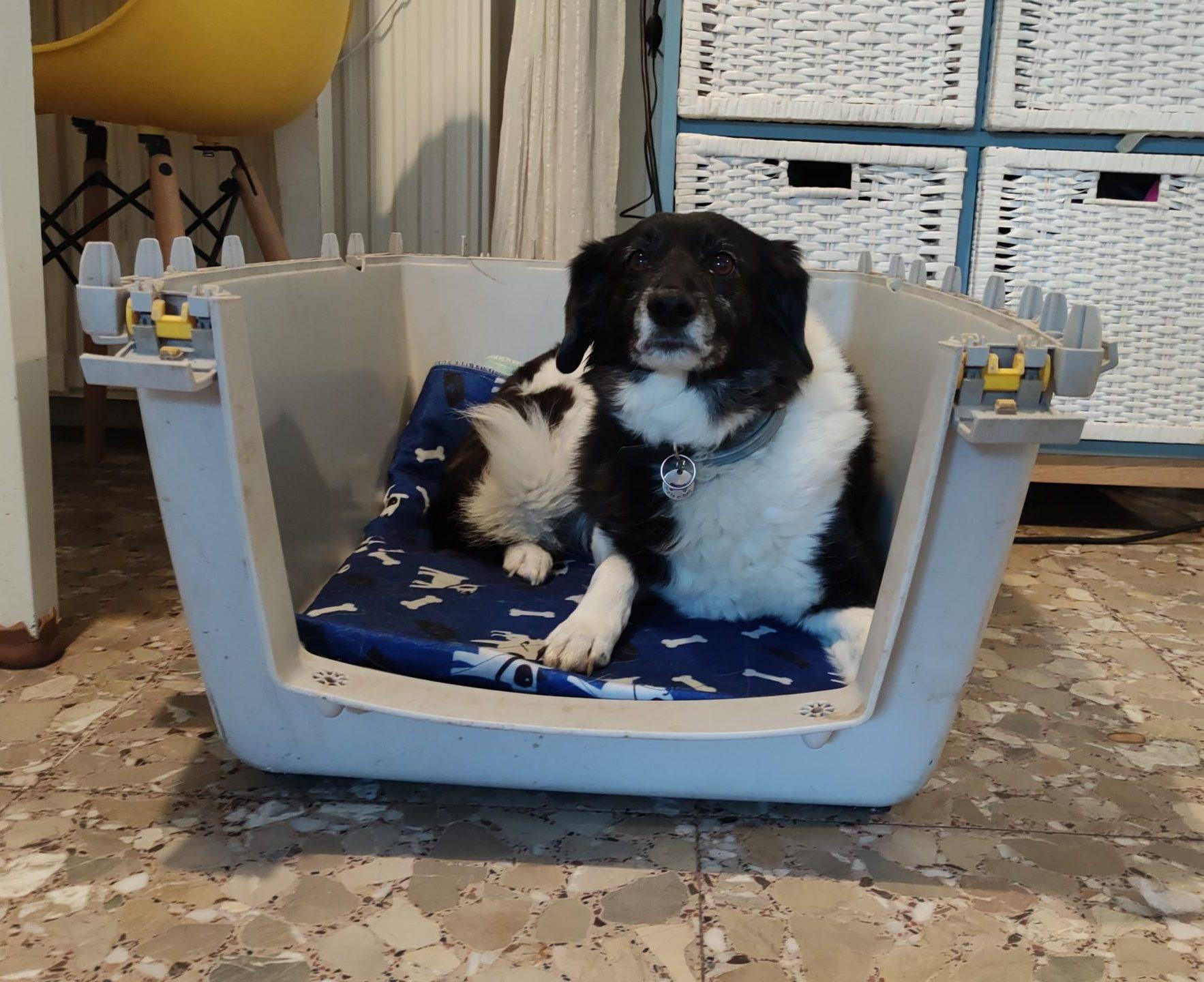Entrenar el transportin con tu perro