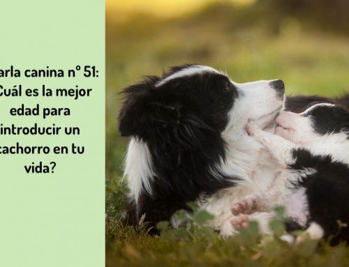 Charla Canina nº51: ¿Cuál es la mejor edad para introducir un cachorro en tu vida?