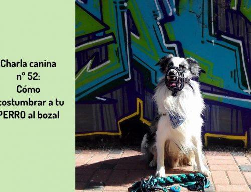 Charla Canina 52: ¿Cómo acostumbrar a tu perro a llevar bozal?