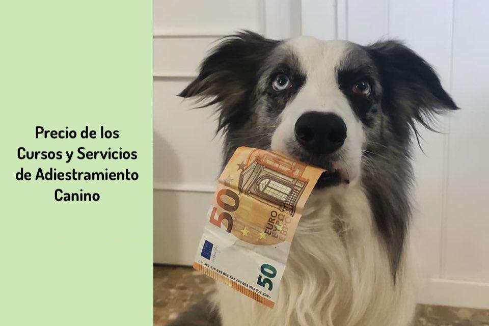 Precio de los Cursos y Servicios de Adiestramiento Canino